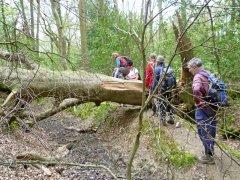 Fallen tree: mud or climb?