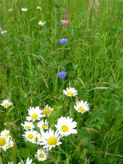 Wild flowers in meadow